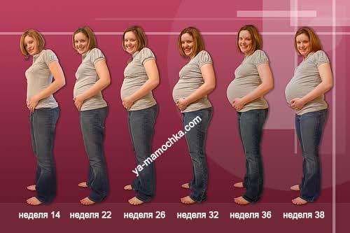 Рост животика со сроком беременности