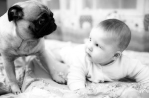 Новорожденный и животные в доме - что, как, когда