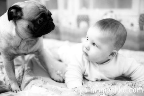 когда знакомить ребенка с домашними животными