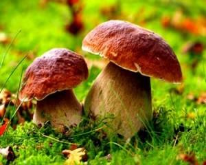 Можно ли беременным грибы, способы приготовления и виды грибов