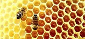 Мед при беременности: полезные свойства и противопоказания